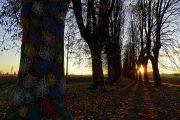 Il lungo viale alberato nella luce e nei colori del tramonto-1