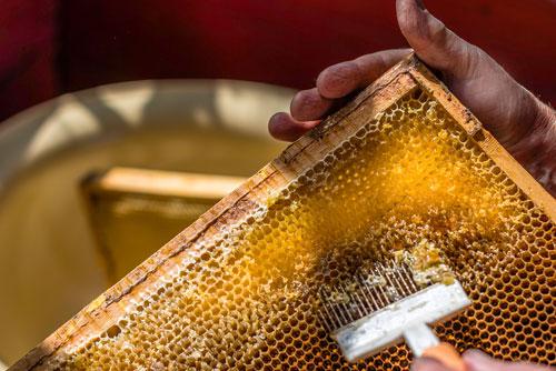 Prodotti tipici Isola Bergamasca | miele