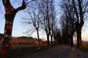 Il lungo viale alberato nella luce e nei colori del tramonto-2